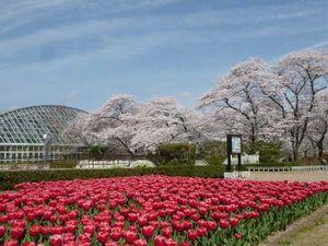 植物園の日.jpg