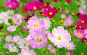 花の日.jpg